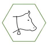 Diversité : la plus grande diversité de races bovines au monde